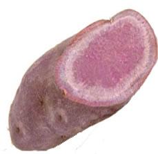 健康に良い食材むらさき芋